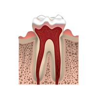 A healthy tooth structure