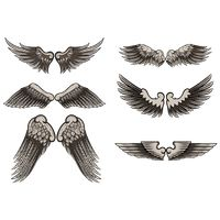 Collection of wing designs