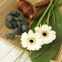 Flowers, wooden massager and small stones