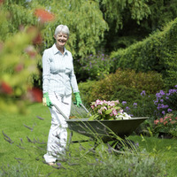 Senior woman pushing a wheelbarrow of plants in the garden