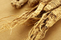 Traditional chinese herb american ginseng