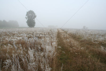 Park Outdoor : View of frozen grass on meadow