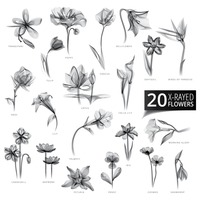 Collection of x-rayed flowers
