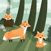 Foxes in forest