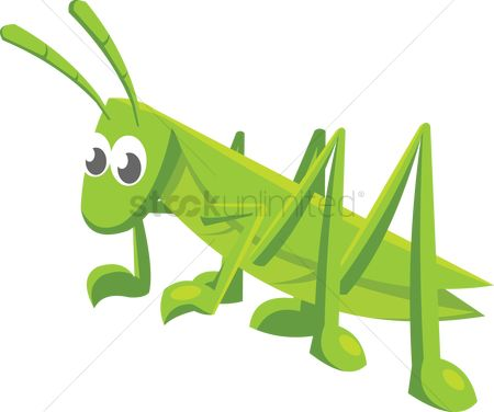 Grass background : A grasshopper on white background