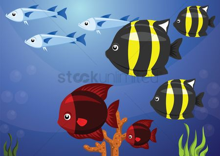 Red : A school of fish