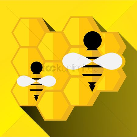 Honeycomb : Bees and honeycomb