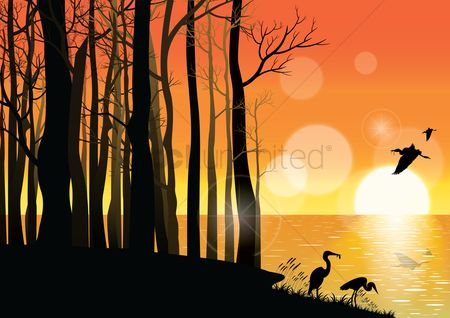 Sunray : Birds background