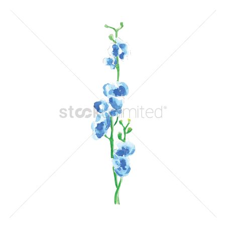 Fragrance : Blue orchids