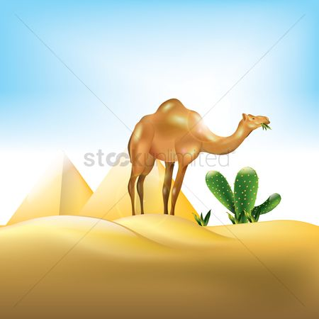 Eat : Camel feeding in the desert