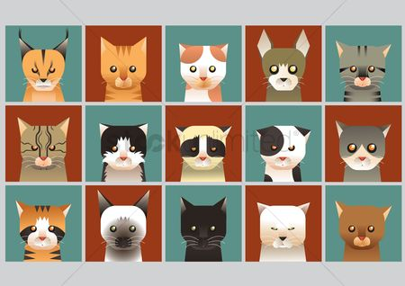 Expression : Cat collection