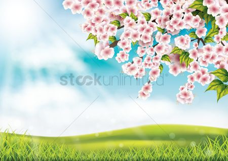Grass background : Cherry blossom background
