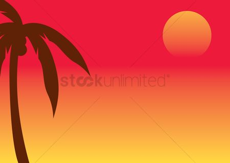 Romance : Coconut palm tree and the sun