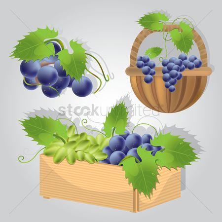 Grapes : Collection of grapes in basket