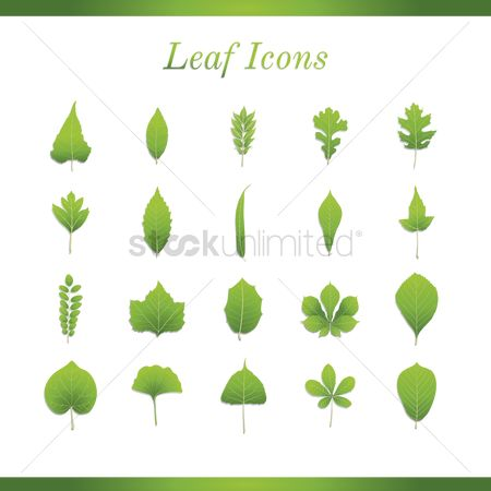 Biology : Collection of leaves icons