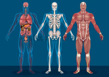 Guys : Collection of male human anatomy