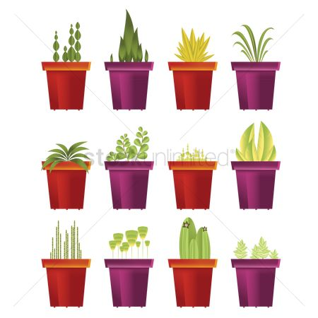 Flower pot : Collection of potted green plants