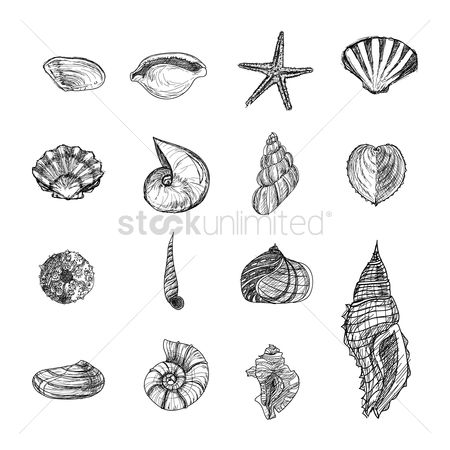 Starfishes : Collection of seashells