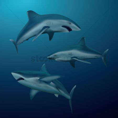 Marine life : Collection of shark