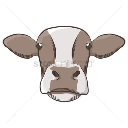 Dairies : Cow face