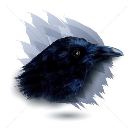 Feather : Crow