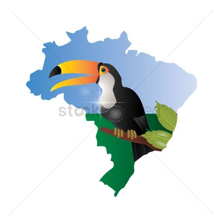 Toco toucan : Double exposure of brazil map with toco toucan