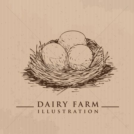 Dairy : Eggs in nest