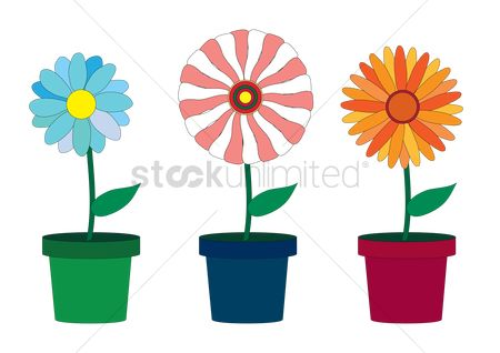 Flower pot : Flowers in pots