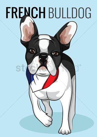 Flag : French bulldog poster