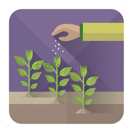 Arm : Hand putting fertilizers on plants