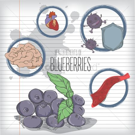 Blueberry : Health benefits of blueberries design