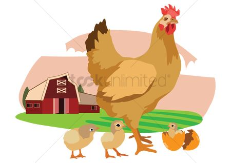 Agriculture : Hen with chicks