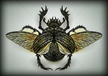Biology : Intricate insect design