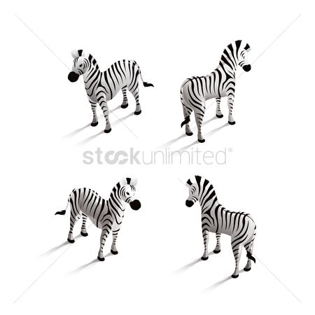 Backview : Isometric zebra