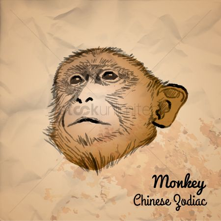 Smart : Monkey chinese zodiac