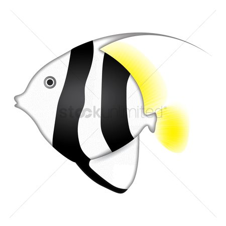 Marine life : Moorish idol fish