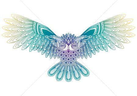 Owl : Owl spreading wings