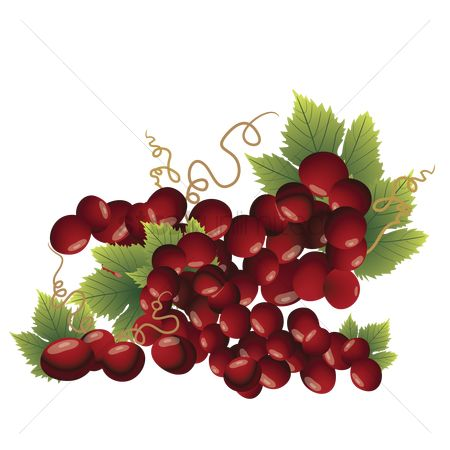 Grapes : Red grapes