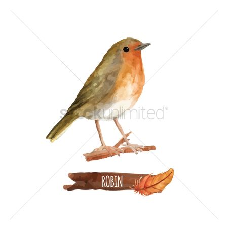 Feather : Robin