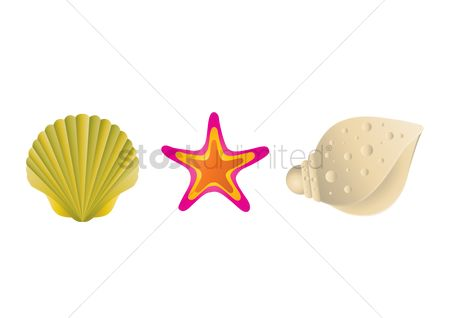 Starfishes : Sea shells