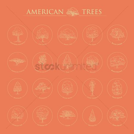 Texas : Set of american trees
