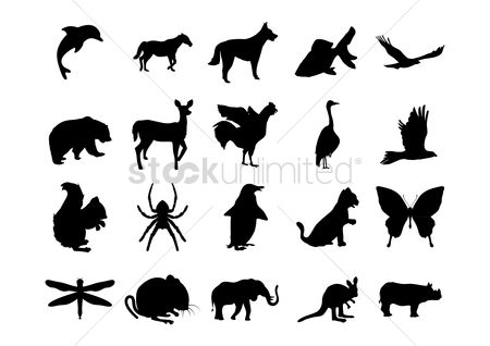 Hawks : Set of animal silhouettes