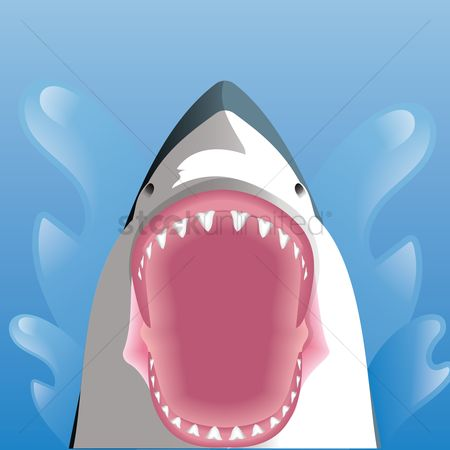 Open : Shark with opened mouth