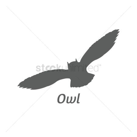 Animal : Silhouette of owl