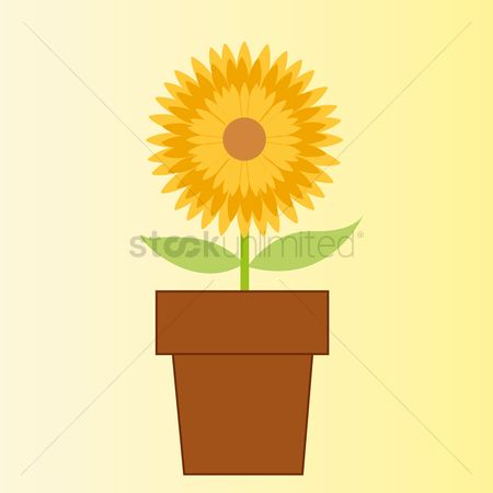 Flower pot : Sunflower in a pot