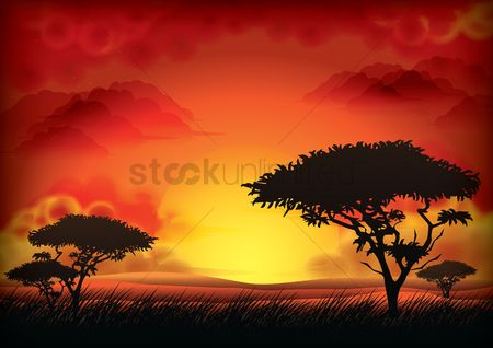 Grass : Sunset landscape