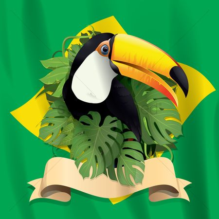 Leaves : Toco toucan