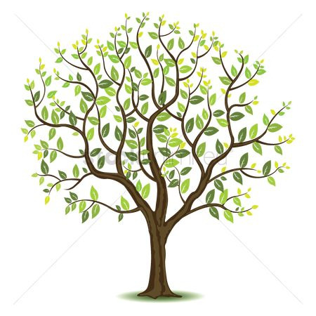 Summer : Tree with green leaves
