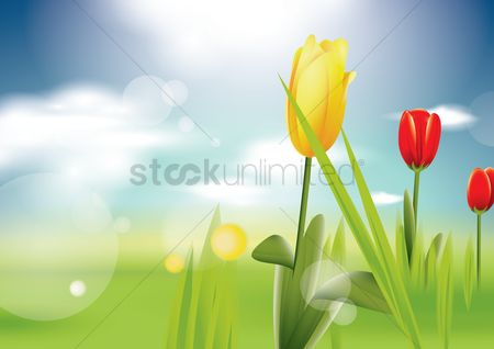 Grass background : Tulips background
