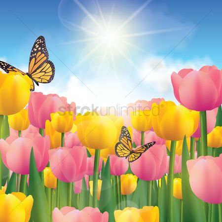 Sunray : Tulips background